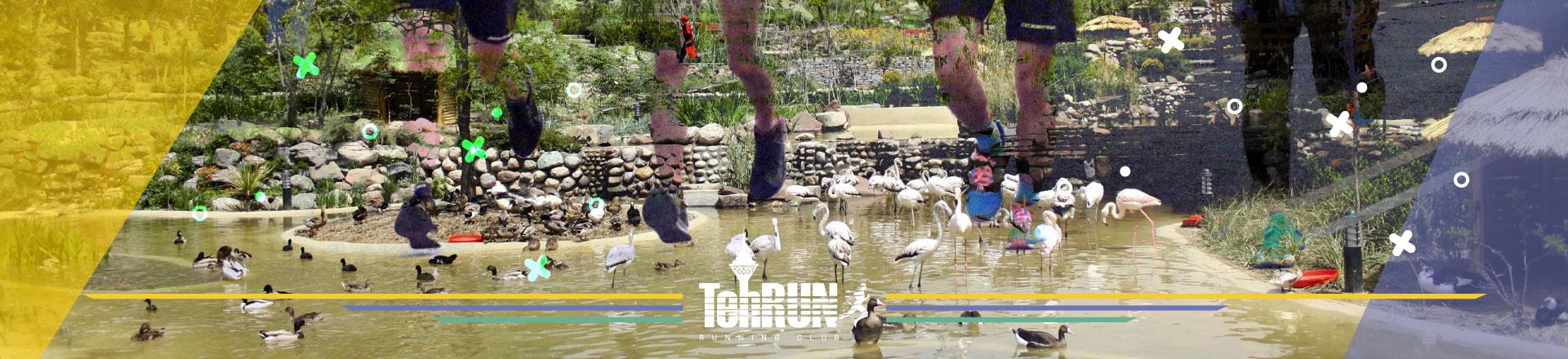 باغ پرندگان لویزان